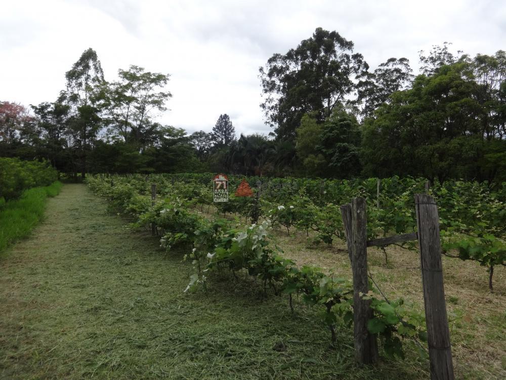 Comprar Rural / Sítio em Pindamonhangaba R$ 1.400.000,00 - Foto 4