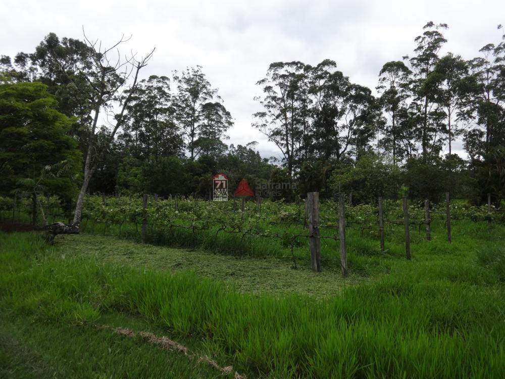 Comprar Rural / Sítio em Pindamonhangaba R$ 1.400.000,00 - Foto 5