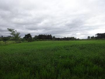 Comprar Rural / Sítio em Pindamonhangaba R$ 1.400.000,00 - Foto 8