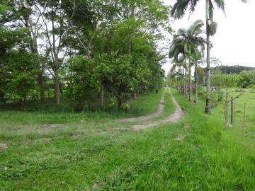 Comprar Rural / Sítio em Pindamonhangaba R$ 1.400.000,00 - Foto 9